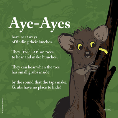 Sample Page: Aye-Aye